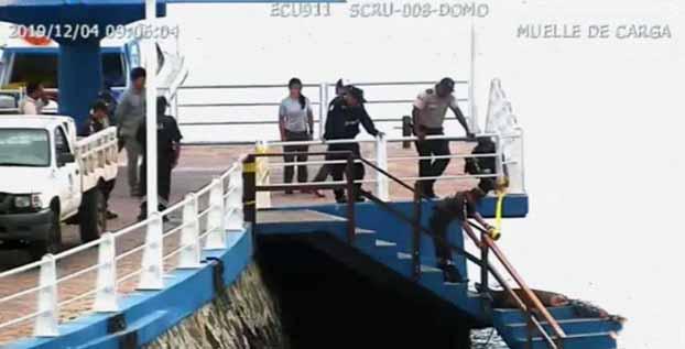 Lobo marino que habría sido atacado por tiburón fue atendido en Galápagos
